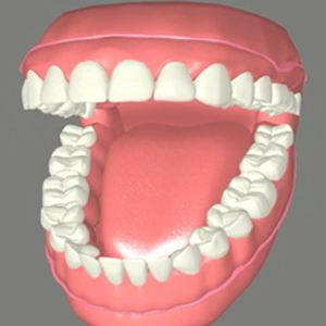 Close-up illustration of dentures